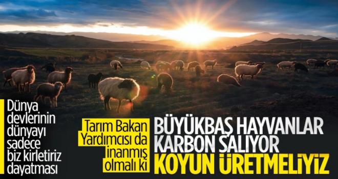 Ayşe Ayşin Işıkgece: Karbon salınımı nedeniyle koyun üretilecek