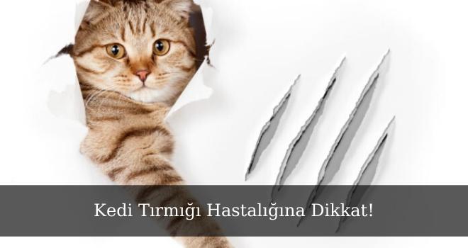 Kedi Tırmığı Hastalığına Dikkat!