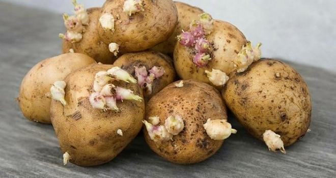 Soframızın vazgeçilmezi ama... Dikkat bu patatesler öldürüyor!