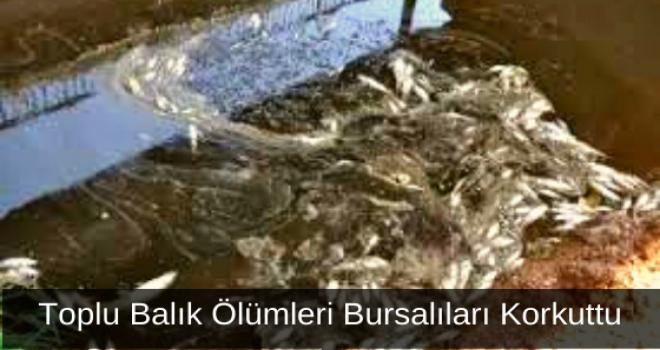 Toplu Balık Ölümleri Bursalıları Korkuttu