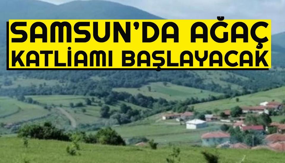 Samsun'da Ağaç Katliamı Başlayacak